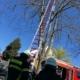 Leiter im Baum - Krähe hängt im Baum fest
