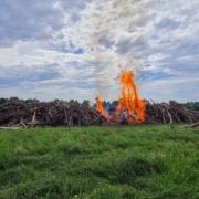 Brennender Holzhaufen auf Wiese